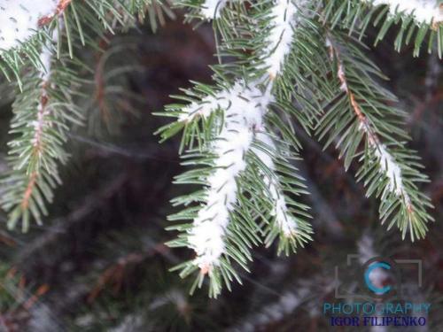 Зимовий Кропивницький